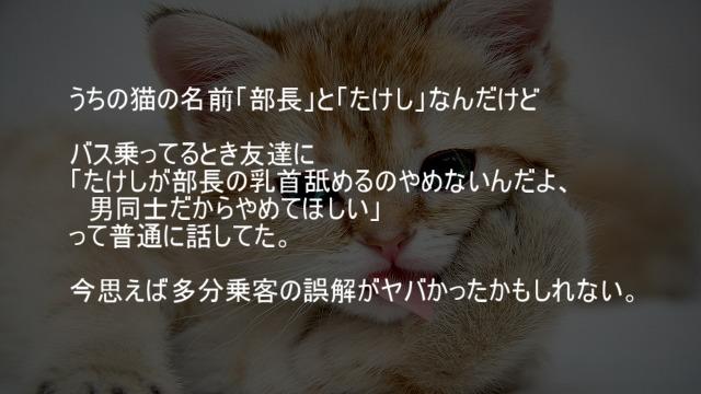 猫の名前で誤解