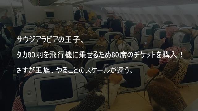 サウジアラビアの王子 タカ80羽を飛行機に乗せるため80席のチケットを購入