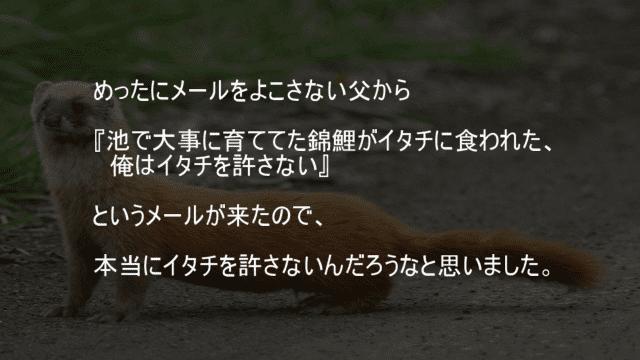 池で大事に育ててた錦鯉がイタチに食われた