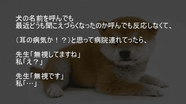 犬に無視される飼い主