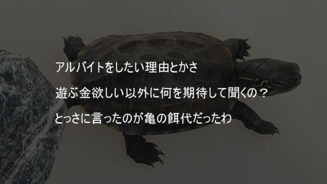 亀のエサ代