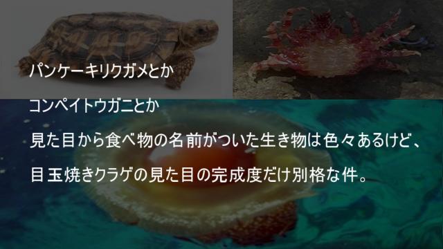 目玉焼きクラゲの見た目の完成度