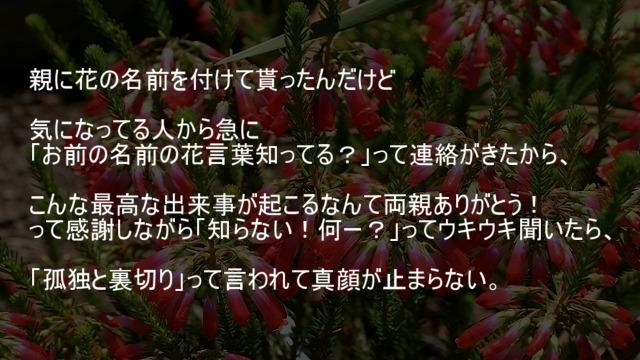 花言葉は孤独と裏切り