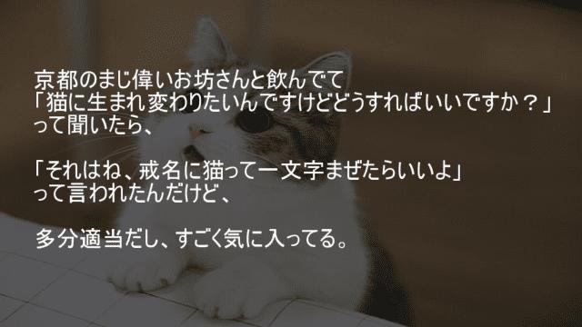 猫に生まれ変わるには戒名に猫って一文字混ぜる