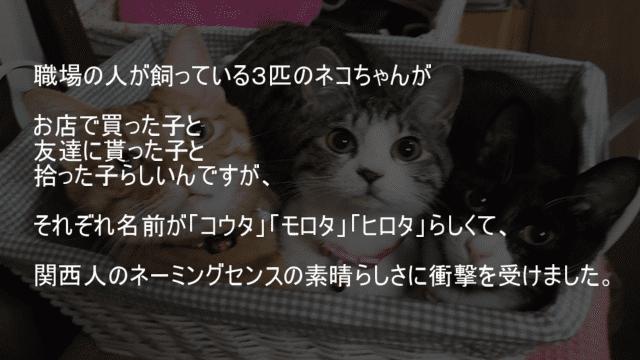 猫の名前 コウタ モロタ ヒロタ 関西人のネーミングセンス