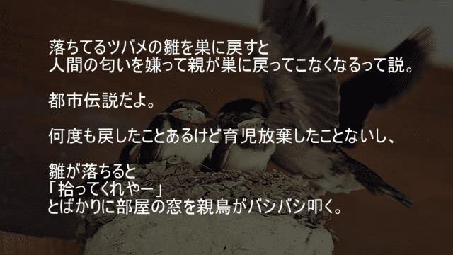ツバメの巣の雛が落ちていると拾ってくれと親鳥がバシバシ叩いてくる