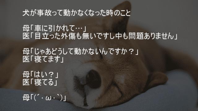 犬が事故って病院へ行ったけど問題なし寝てるだけ