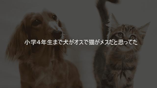 小学4年生まで犬がオスで猫がメスだと思ってた