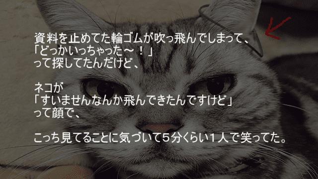 輪ゴムが飛んでったと思ったら猫の耳に引っかかる