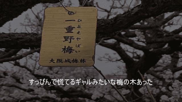 一重野梅(ひとえやばい)すっぴんで慌てるギャルみたいな梅の木