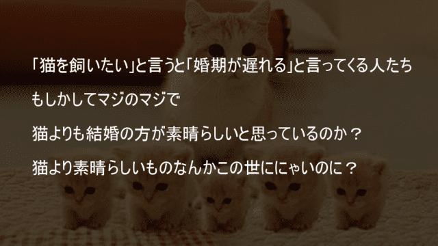 猫より素晴らしいものなんかこの世にない