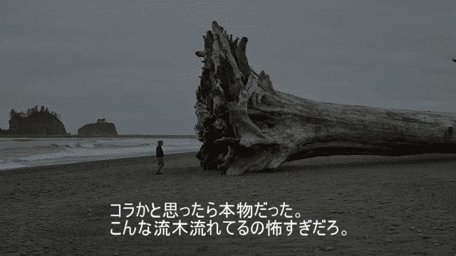 すごく大きい流木