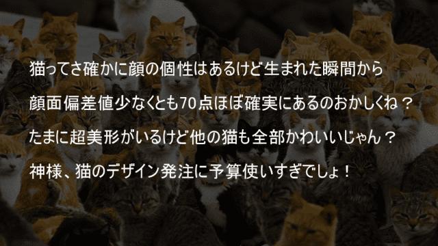 猫の顔面偏差値は70はある