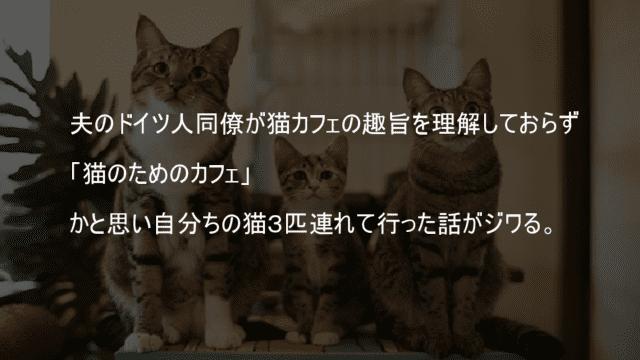 猫カフェに自分家の猫を連れて行く