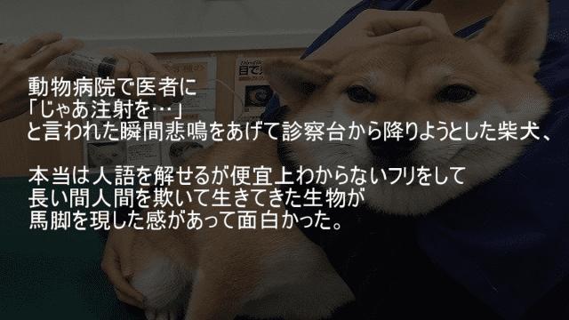 動物病院で注射をしようとすると悲鳴をあげる犬