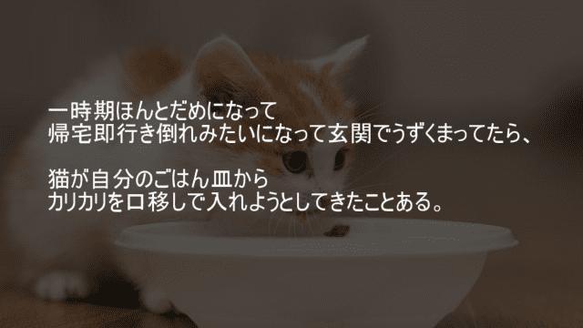 玄関でうずくまってたら猫が口移しをしてくる