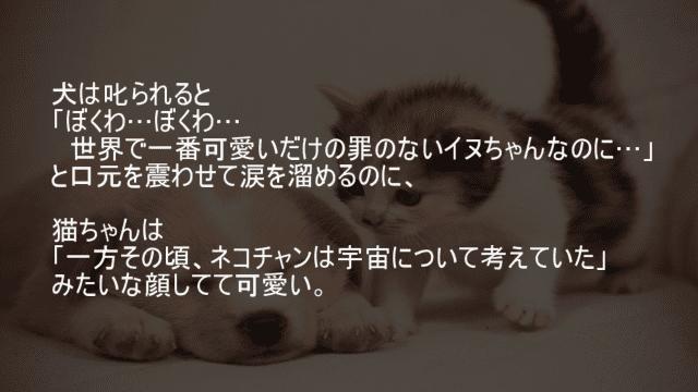 犬と猫の叱られたときの反応の違い