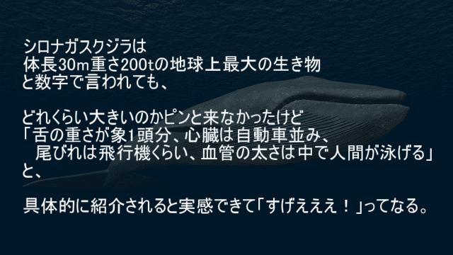 シロナガスクジラの生体
